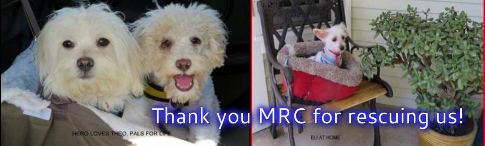 Adoptable Dogs - Maltese Rescue California
